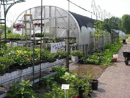 Our Garden Raising Rarities
